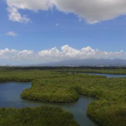 mangrove3