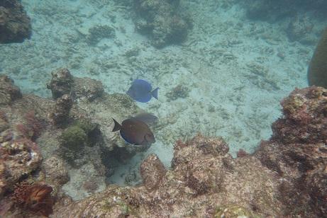 poissons sur la barriére de corail