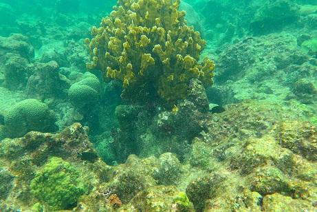 Sur la Barriere de Corail de Fajou