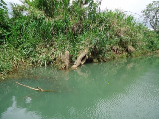 tortue-sur-la-riviere-a-goyave.jpg